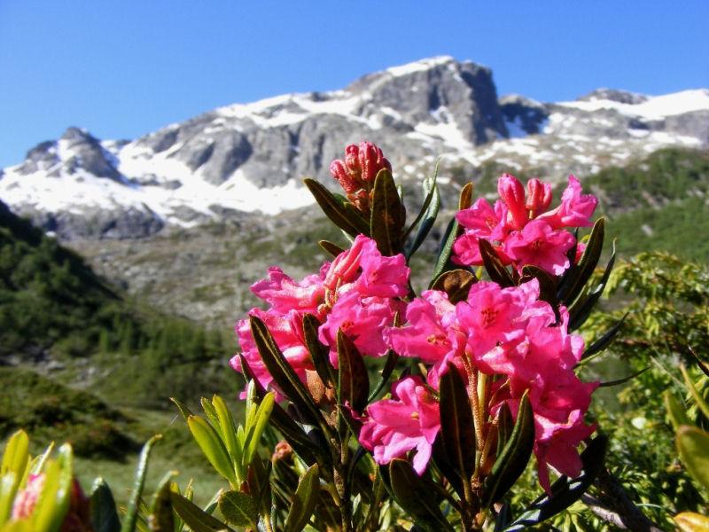 rododendro.jpg