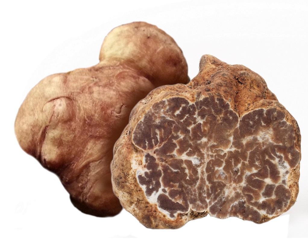 spring-truffle-lombary-gourmet-white-tru